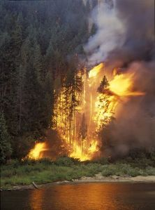 Fire tears through trees along the Wenatchee River west of Leavenworth in Tumwater Canyon during the 1994 Hatchery Creek Fire. Photo by John Marshall.